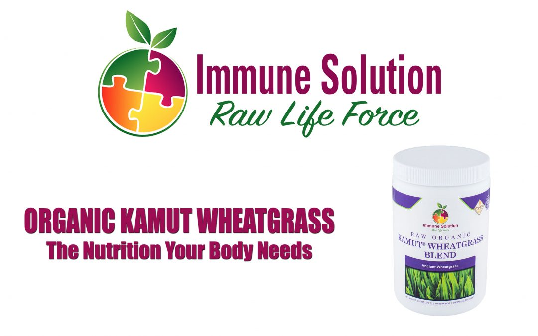 Organic Kamut Wheatgrass – The Nutrition Your Body Needs (with VIDEO)